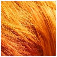 HairCreativ, Friseursalon, Köln-Neuehrenfeld_8, Färbung, rot